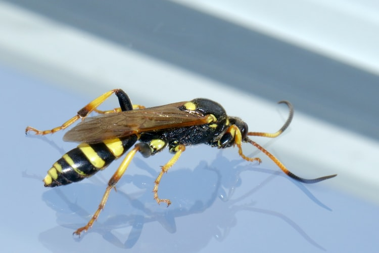 Wasp removal Edinburgh